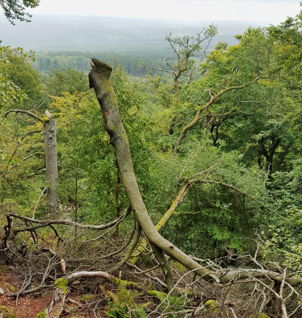 NationalparkHunsrückHochwald3_20150905